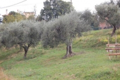 ogled-socialne-kmetije-bassano-del-grappa